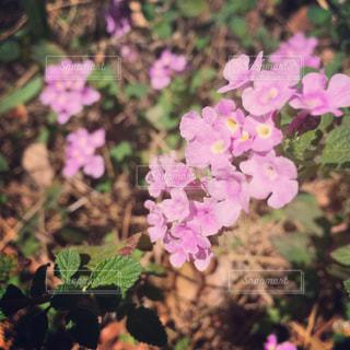 野草・花のアップの写真・画像素材[907712]