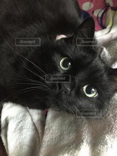 猫 - No.342285