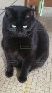 猫の写真・画像素材[342318]