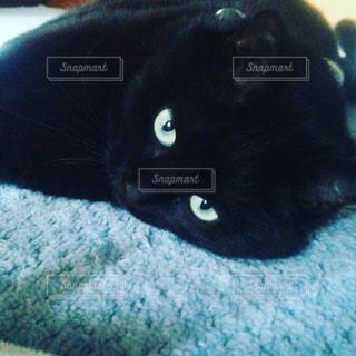 猫の写真・画像素材[342319]