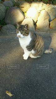 猫の写真・画像素材[342330]