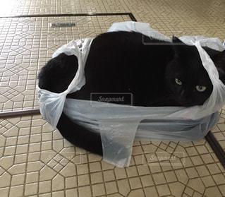 猫の写真・画像素材[342364]