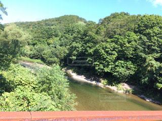 森を流れる川の写真・画像素材[719674]