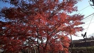 紅葉の写真・画像素材[2774416]