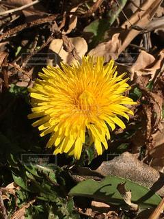 花の写真・画像素材[342552]