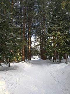 雪景色の写真・画像素材[2681903]