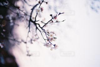 風景の写真・画像素材[374819]