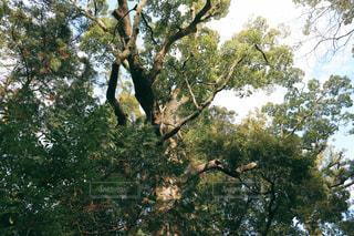 大きな木の写真・画像素材[2853035]