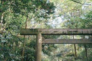 伊勢神宮の写真・画像素材[2853037]