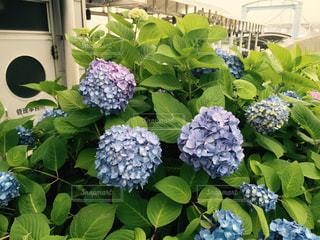 花の写真・画像素材[344500]