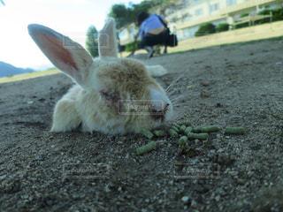 近くに動物のアップの写真・画像素材[823293]