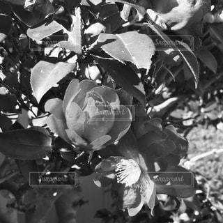 花の写真・画像素材[359092]
