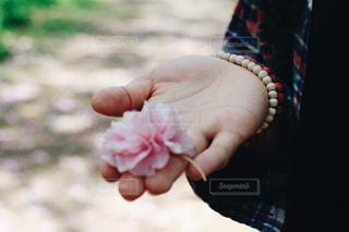ピンクの花を拾いあげた手のひらの写真・画像素材[1111198]