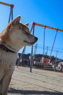 犬の写真・画像素材[373179]