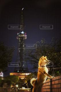 犬 - No.444546