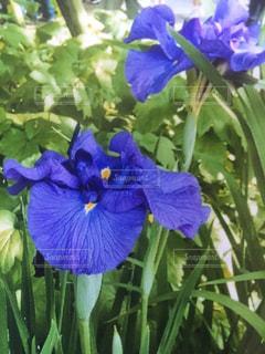 花の写真・画像素材[384907]