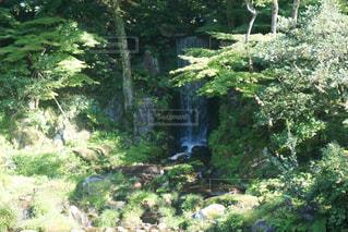 庭の写真・画像素材[342760]