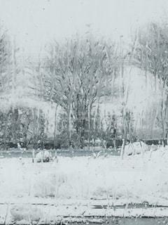 冬 - No.343994