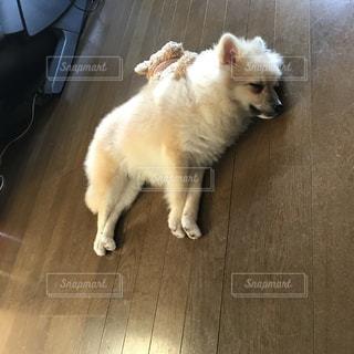 #犬の写真・画像素材[343601]