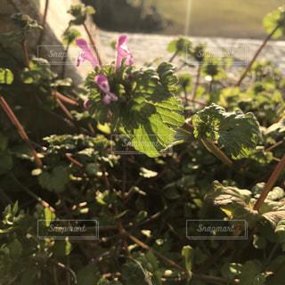 #花の写真・画像素材[344065]