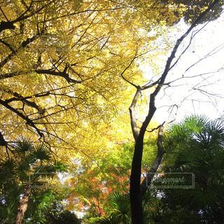 秋の写真・画像素材[343005]