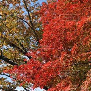 秋の写真・画像素材[343036]