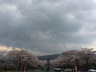 春の写真・画像素材[358214]