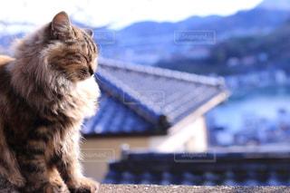 猫の写真・画像素材[343858]