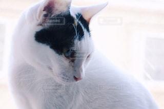 猫の写真・画像素材[343869]