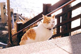猫の写真・画像素材[346359]