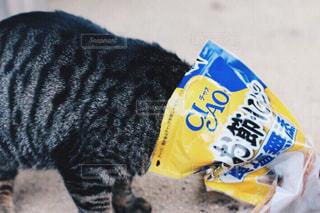 猫の写真・画像素材[347093]