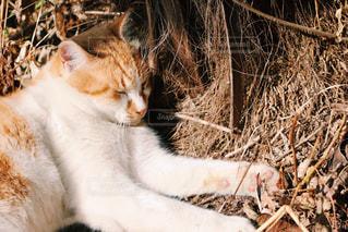 猫の写真・画像素材[353197]