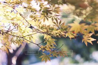 風景 - No.359287