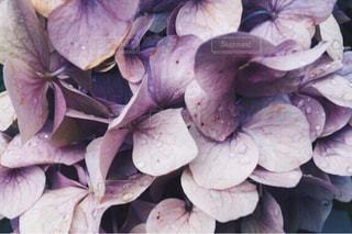 花の写真・画像素材[371875]