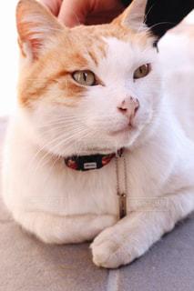 猫の写真・画像素材[376314]