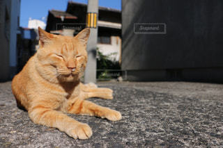猫の写真・画像素材[408447]
