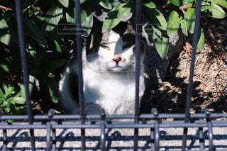猫の写真・画像素材[408456]