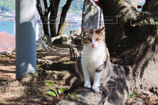 猫の写真・画像素材[408457]