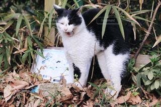 猫の写真・画像素材[408459]