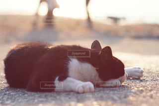 猫の写真・画像素材[408460]
