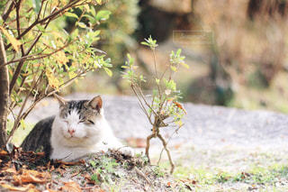 猫の写真・画像素材[408461]