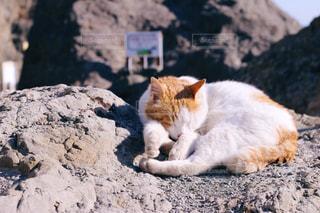 猫の写真・画像素材[408462]