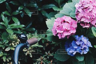春の写真・画像素材[519009]