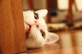 愛猫 - No.519041