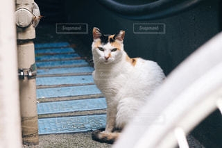 猫の細道の写真・画像素材[778829]