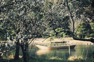 三渓園の写真・画像素材[779033]