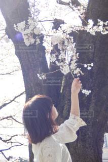 桜の写真・画像素材[1130048]
