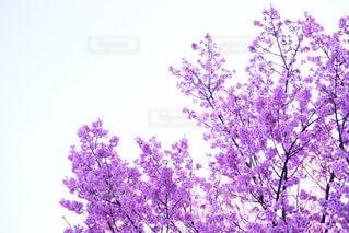 No.344674 桜