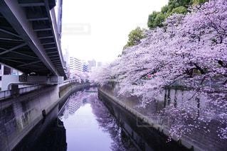 No.345176 桜