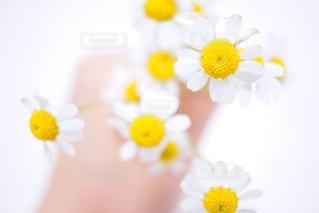 花束の写真・画像素材[346969]
